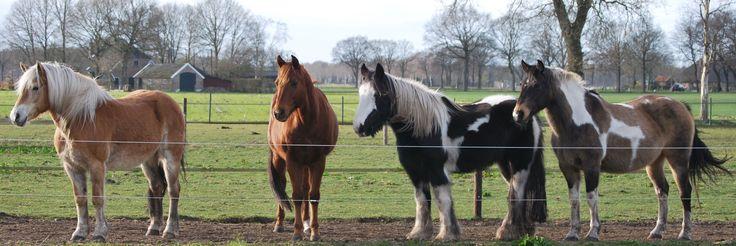 Natuurlijke hoefverzorging sluit beter aan bij de levensstijl van ieder paard, ongeacht ras of discipline!