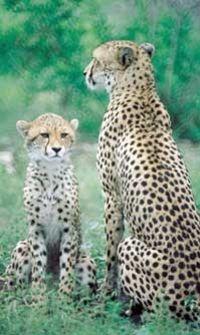 Hluhluwe Game Reserve Safari #durban #southafrica
