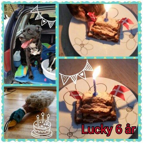 Lucky 6 års fødselsdag d.8-01-15
