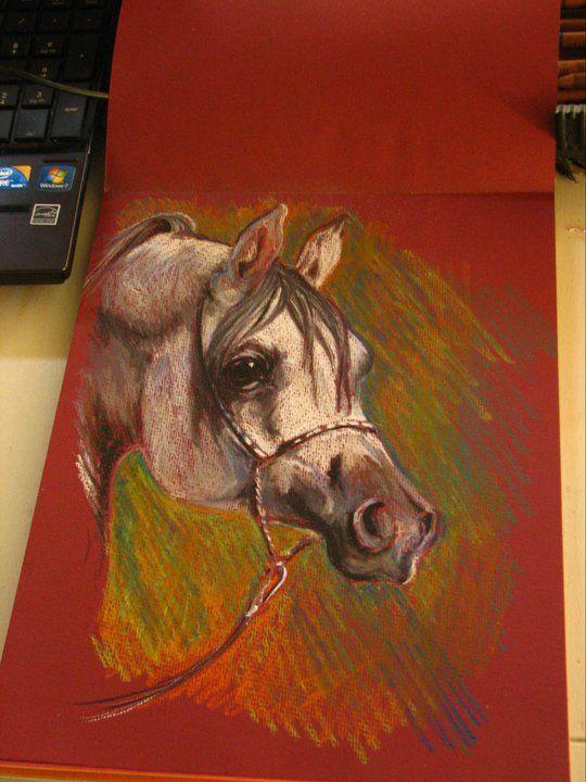Arabian Stallion - pastel on paper