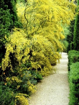 192 Best Images About Shrubs On Pinterest Gardens Sun