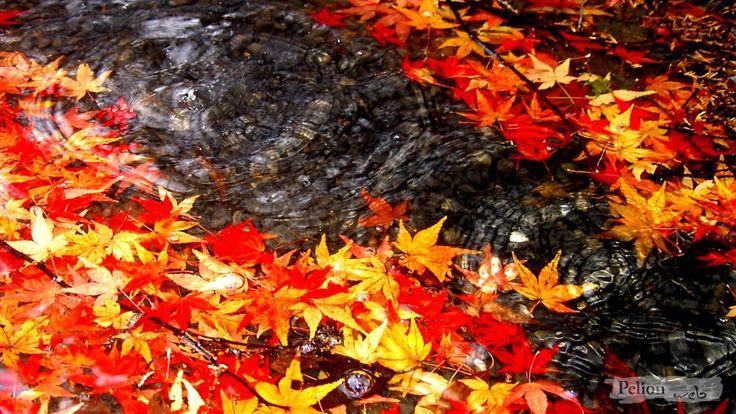 autumnal leaves, Pelion, Greece