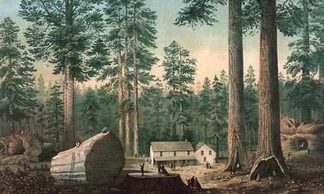How a giant tree's death sparked the conservation movement 160 years ago   Leo Hickman Mammoth Tree