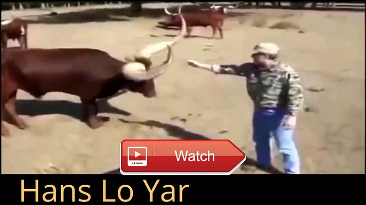 Funny and cute animals  Very funny video must like funny videos funny clip funny fail funny moments funny pranks funny pranks prank wars funny video funny video abc funny videos  on Pet Lovers