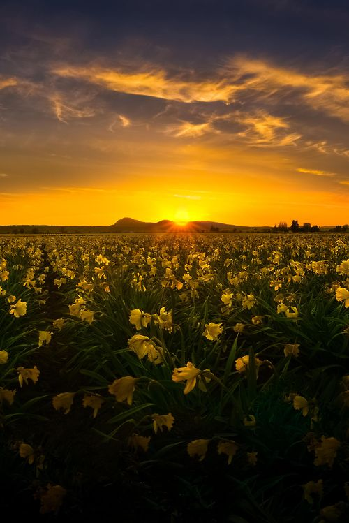 Fields of Gold, Washington, by Chris Williams Exploration Photography, on 500px.