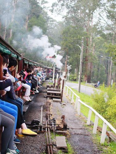 蒸気機関車に乗ってダンデノン丘陵へ。メルボルン旅行の観光アイデア。