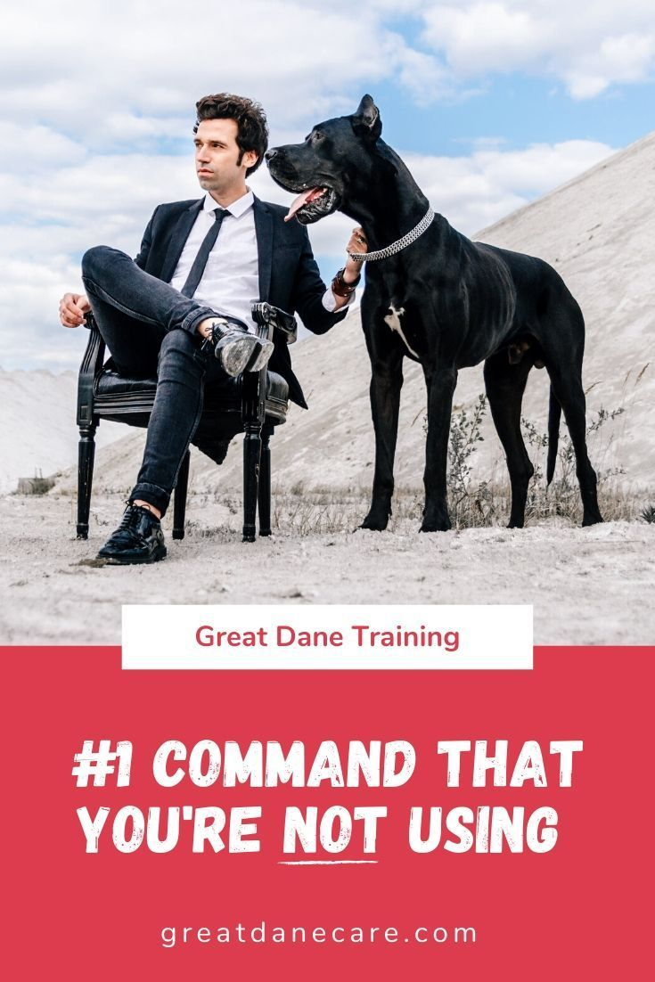 Sit Come And Stay Are All Great Commands That Every Dog Should