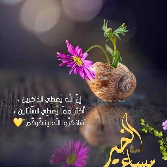 ان الله يعطي Morning Words Evening Quotes Evening Greetings