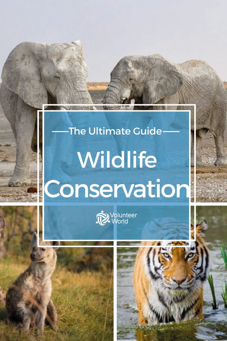 Everything you need to know about volunteering in wildlife conservation!