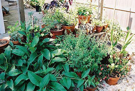 βότανα αρωματικά φυτά στο μπαλκόνι