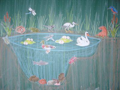 Sachunterricht in der Grundschule: Tafelbild Teich