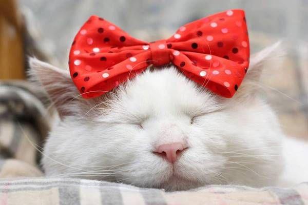 Dünyanın En Mutlu Uyuyan Kedisi