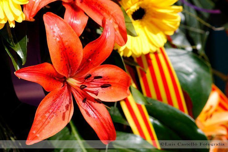 By Luis Castelló Fotografía / España