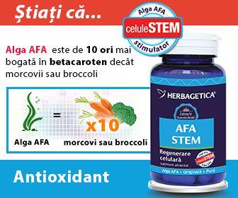 AFA Stem are efecte exceptionale in stimularea productiei de Celule Stem in organism si regenerarea acestuia.