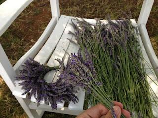 Sunshine Lavender Farm: Making a Lavender Wreath 3