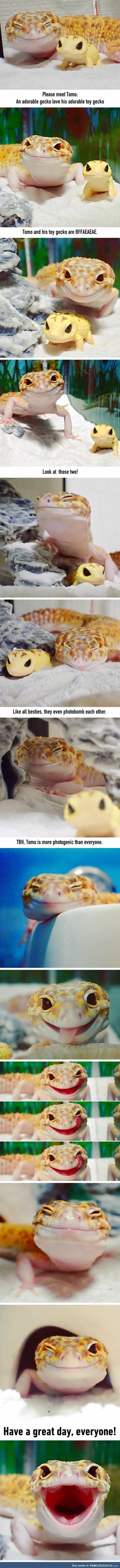 This Gecko Smiling With His Toy Gecko Is The Purest Thing You'll See Today -Actually really cute! 😘