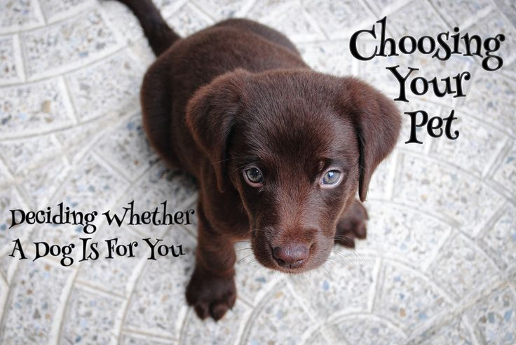 Deciding If A Dog Is For You - Read about whether a dog will fit into your lifestyle. https://petztrax.wordpress.com/2016/01/31/deciding-if-a-dog-is-for-you/ #pets #decisions #puppy