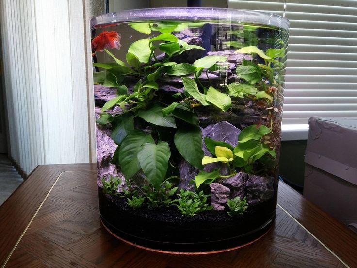 40 Best Aquarium Images On Pinterest Fish Aquariums Fish Tanks