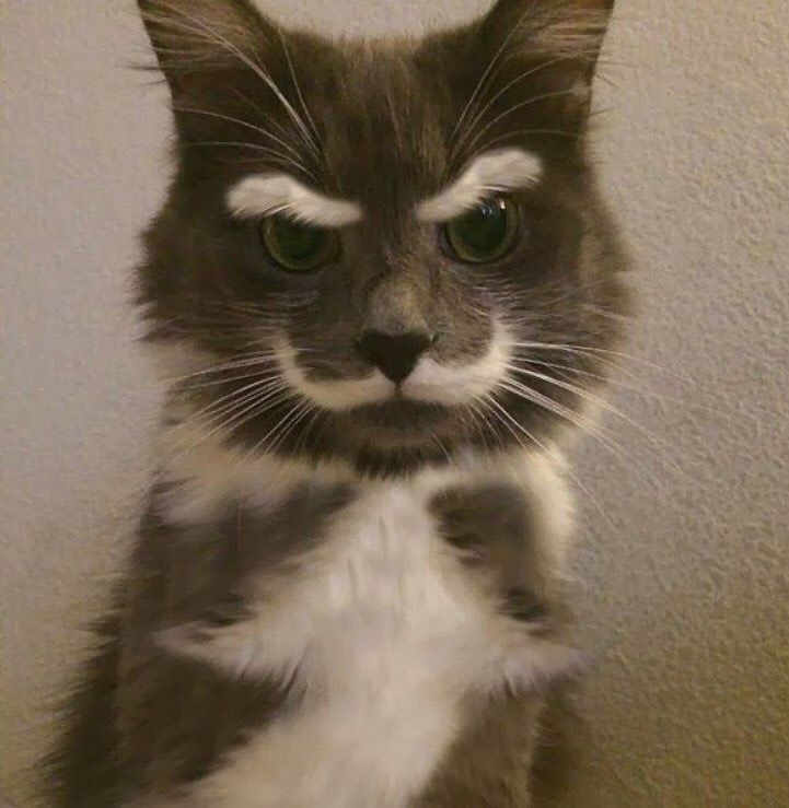 Does He Look Grumpy Or Cute Credits To Thebsharpz Cute Cats Cute Animals Cute Cats And Kittens