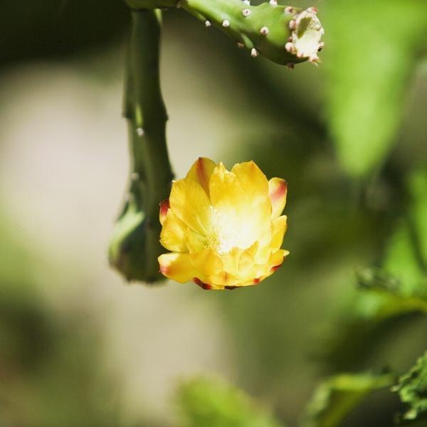 Cactus y suculentas para adornar tu casa | eHow en Español