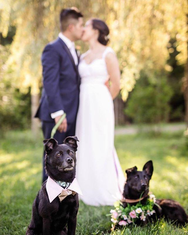 We love when our couples bring their #furfamily to be part of their #bigday  #luminous_weddings #thisiswhatlovelookslike     #theknot #weddingphotographer #torontowedding #bridal #ido #wethenorth #torontostreets #torontolifestyle #theknot #stylemepretty #engaged #shesaidyes #huffpostido #risingtidesociety #weddinginspiration #torontoweddingphotographer #greenweddingshoes #furfriends #dogstagram #weddinginspo
