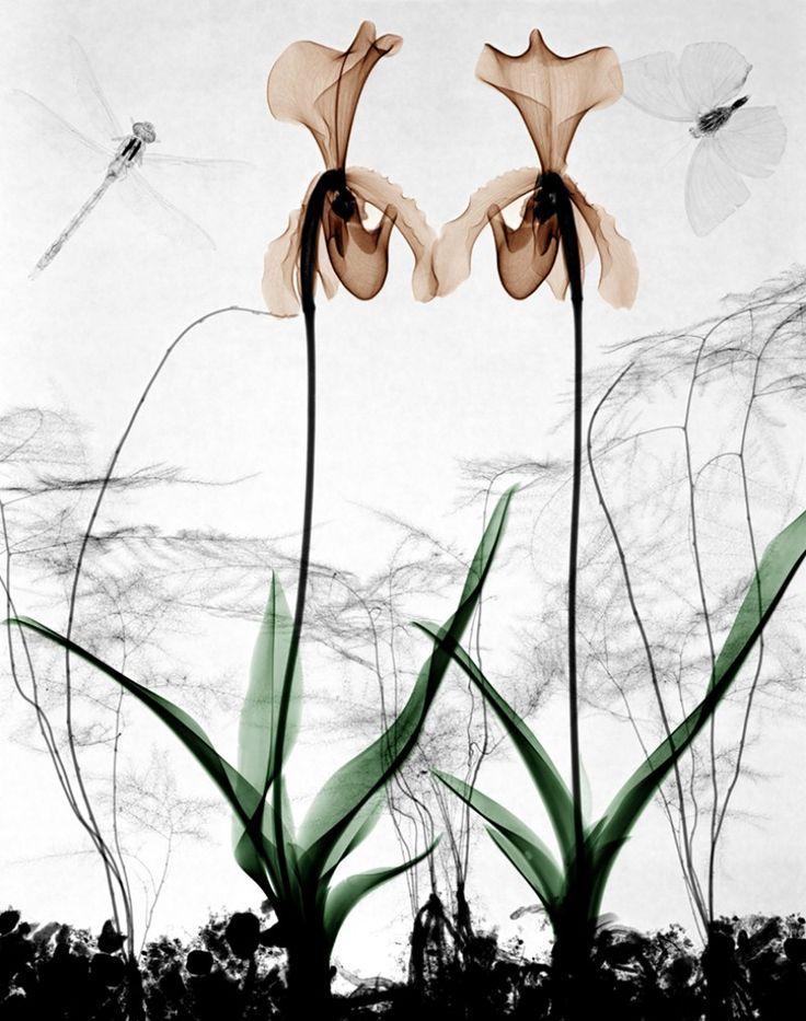 http://www.morrengalleries.nl/nl/kunstenaars/fotografie/arie-van-t-riet.html