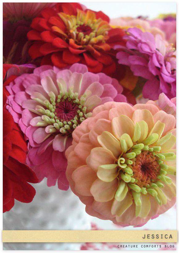 Great photo of beautiful zinnias, and a very cool vintage hobnail vase!