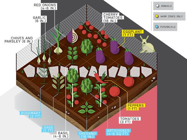 how to start a vegetable garden for dummies