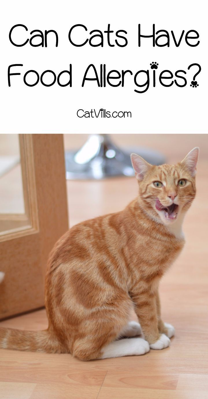 Food Allergies In Cats What You Really Need To Know With Images Cat Allergies
