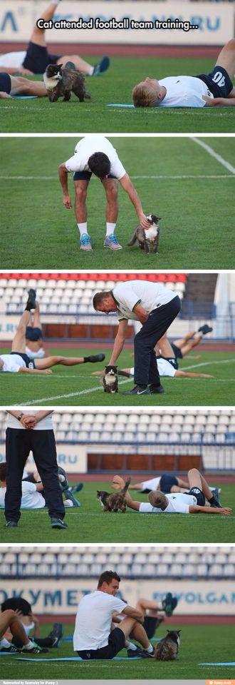 cat attended football team training