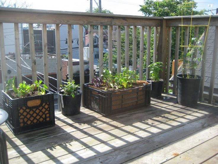 Using Plastic Crates for Gardening - And they are STACKABLE for vertical gardening