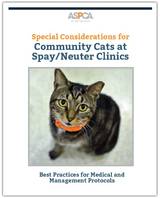 Special Considerations for Community Cats at Spay/Neuter ...
