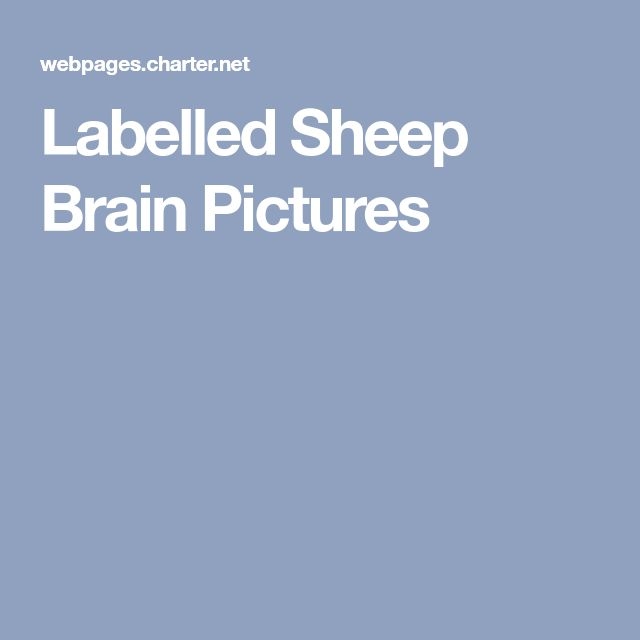 Labelled Sheep Brain Pictures