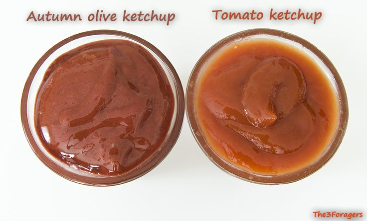 The 3 Foragers: Foraging for Wild, Natural, Organic Food: Autumn Olive Recipe - Autumn Olive Ketchup