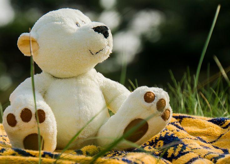 Ingyenes fénykép: Medve, Medvék, Rét - Ingyenes kép a Pixabay-en - 1060700