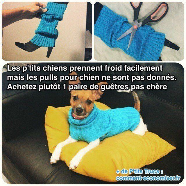 Pull en laine pas cher pour petit chien