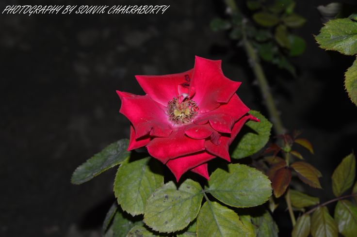 flower at ECo Park
