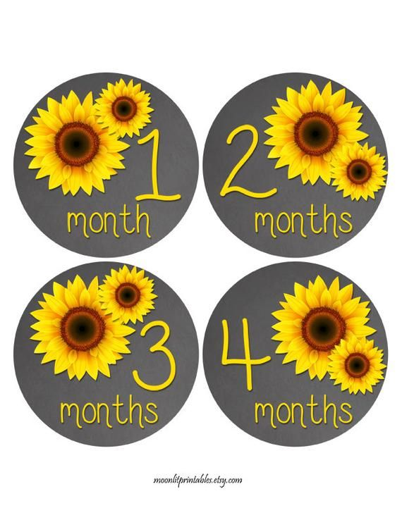 Free Gift Baby Month Stickers Sunflower Stickers Yellow Etsy Baby Month Stickers Month Stickers Baby Stickers
