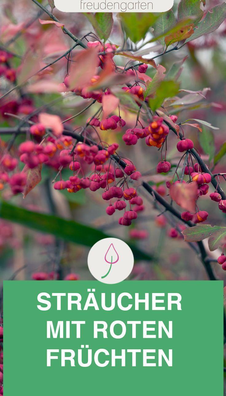 12 Straucher Mit Roten Beeren Straucher Garten Pflanzen Strauch Mit Roten Beeren