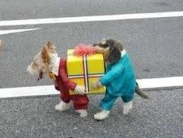 cute dog costume diy