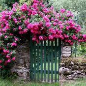 idées à propos de Jardin Romantique sur Pinterest  Salon de jardin ...
