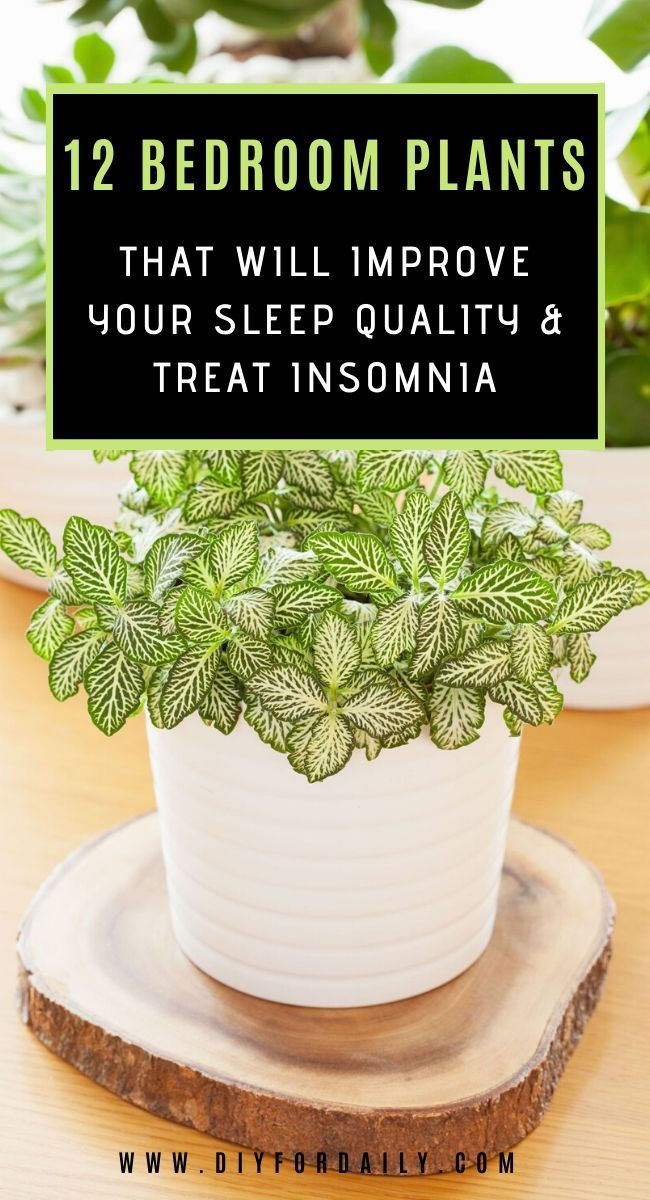 Best Plants For Your Bedroom That Will Improve Sleep Quality And Treat Insomnia  – Home and Garden