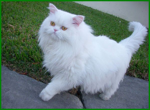 Nama Islami Untuk Kucing 81021 Nama Untuk Kucing Comel Lucu Dan Unik