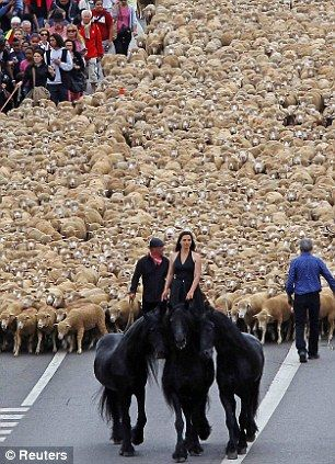 Odyssey: Transhumance is the seasonal migration when herds are moved to grazing grounds