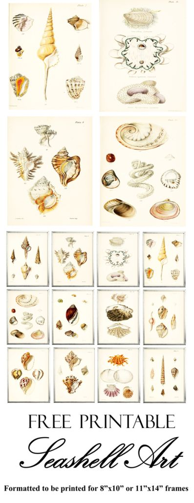 Pinterest Seashell Gallery Wall Image 4