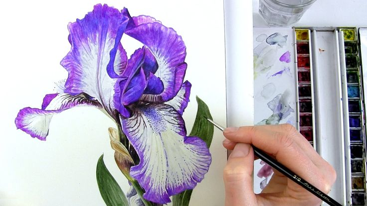 How to paint realistic botanical bearded Iris in watercolour with Anna M...