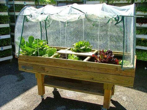 La huerta casera en mesa de cultivo
