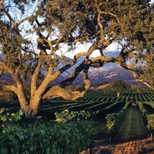 fess parker winery, los olivos, california