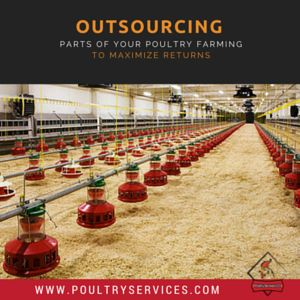 Outsourcing Parts of Your Poultry Farming to Maximize Returns - http://www.poultryservices.com/blog/outsourcing-parts-of-your-poultry-farming-to-maximize-returns
