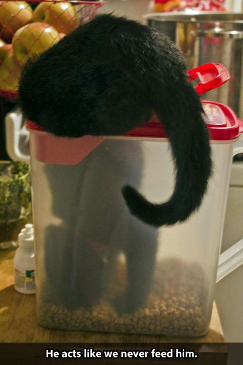 if my cat could fit he would do this too.